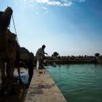 Pijalnia wody dla wielbladow