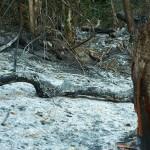 Zgliszcza po wypalaniu lasow w drodze do Phury