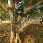 Lopu, Ruala na drzewie